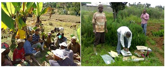 Researchers during field survey and collection of plant specimens
