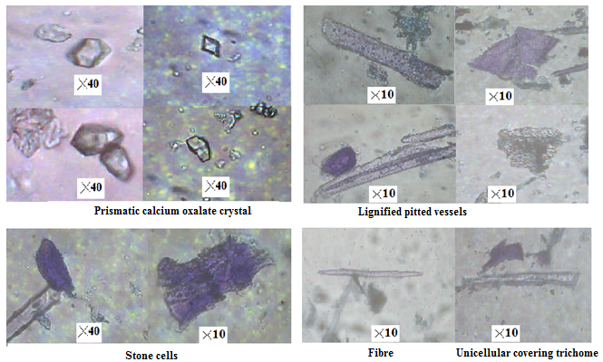 Micrographs of cellular components of the powdered root of P. pinnata