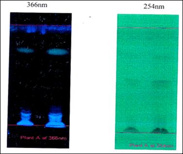 Photo documentation report of Methanolic extract of Plumbago zeylanica