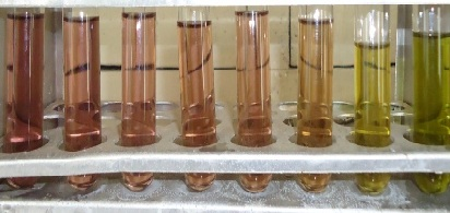 Dose dependent decolorization of DPPH from purple to yellow (L→R) dependent on the degree of reduction (DPPH→DPPH-H) by antioxidant (ascorbic acid or leaf extract).